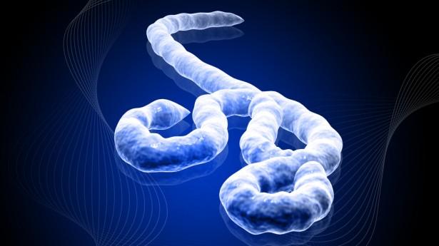ebola_virus_photo