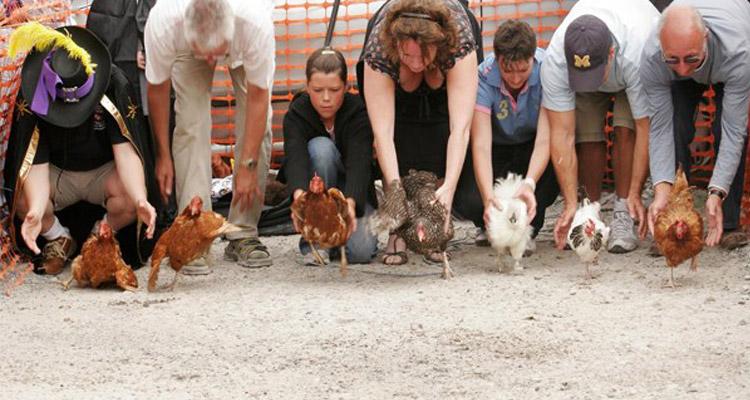 hen-racing