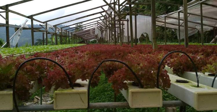 nirob-garden