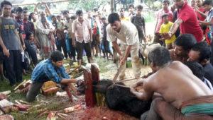 srilanka-posu-boli