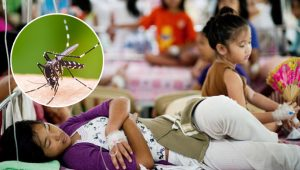 dengue-phili