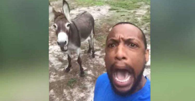 donkey-sing