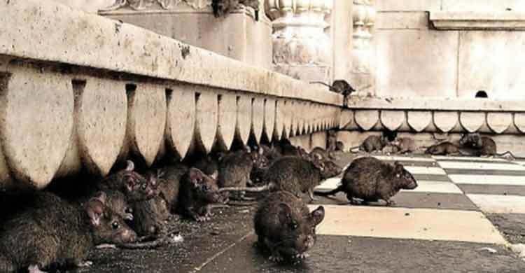 london-rat